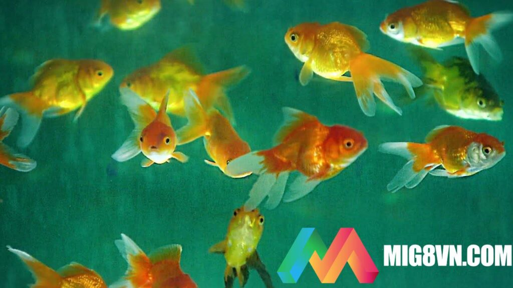 Giấc mơ thấy cá