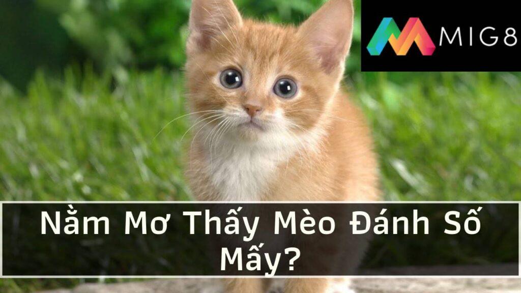 Giấc mơ thấy mèo MIG8