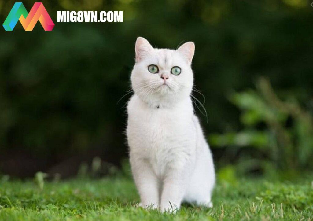 Mơ thấy mèo trắng